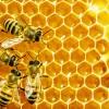 Mật ong rừng nguyên chất  1 lít